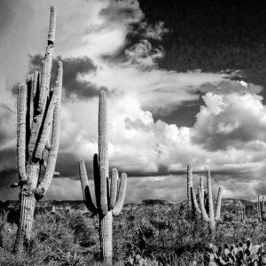 Sonoran Springtime
