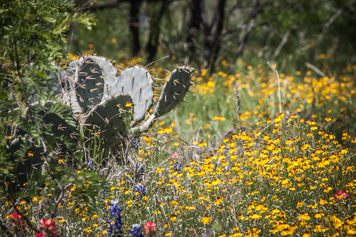 Wildflowers and Cactus