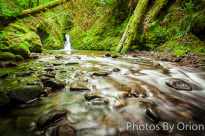 Mossy Moment