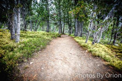 Quiet Trail
