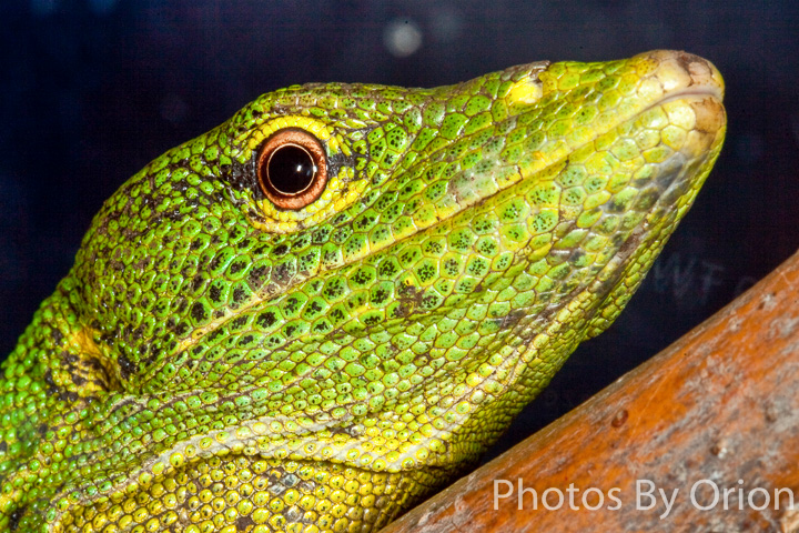 Reptile Gardens – Fine Art Products by Photos By Orion