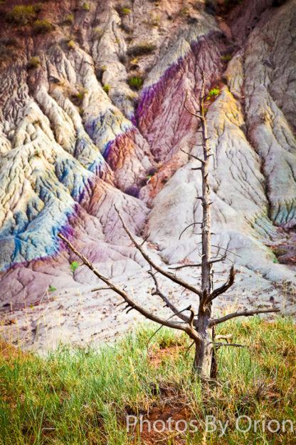Tree snag in Lavender