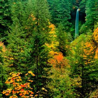 North Falls Color