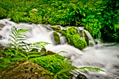 Ferns and Flow