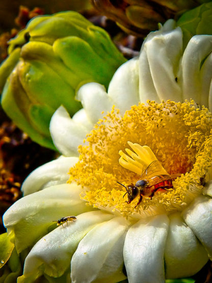 Bee, Blossom and Bud