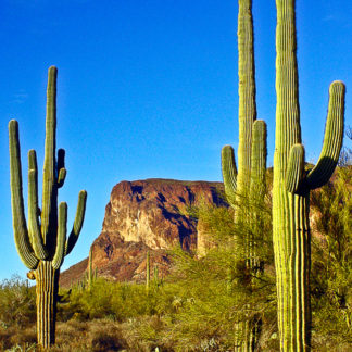 Cacti and Mountain