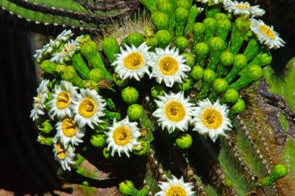 Suguaro Bouquet