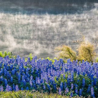 Bluebonnets and River