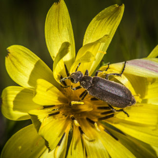 Wildflower and Bug