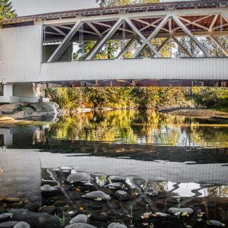 Larwood Reflection