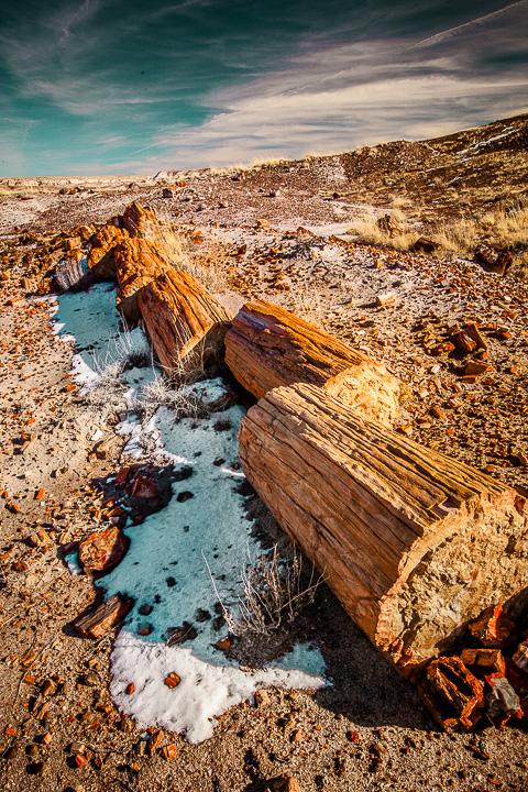 Segmented Petrified Log